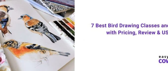 7 Best Bird Drawing Classes and Courses with Pricing, Review & USPs