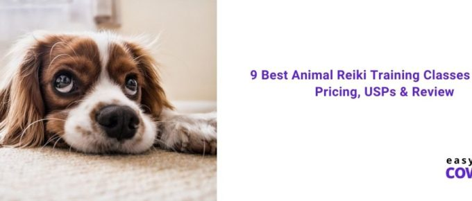 9 Best Animal Reiki Training Classes Online Pricing, USPs & Review [2021]